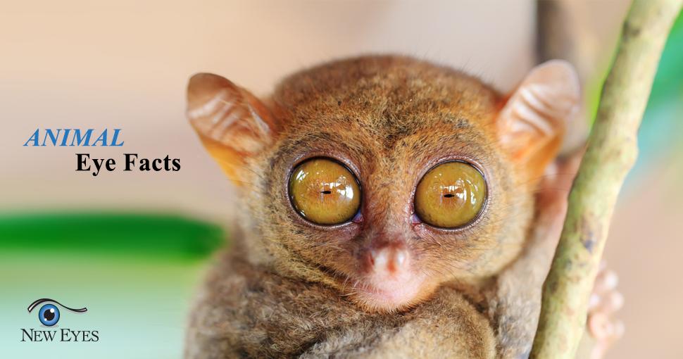post cataract surgery steroid eye drops